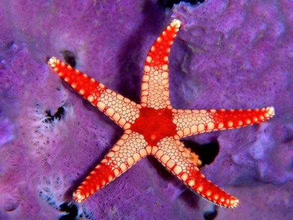 Starfish_-_underwater_backgrounds