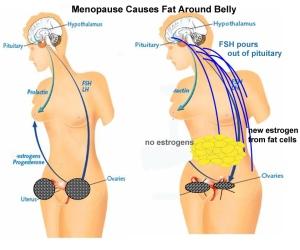 menopause4crop