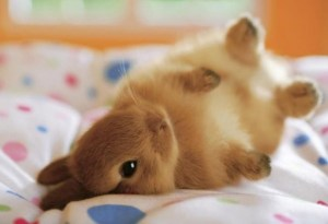 bunny-on-a-bed-big