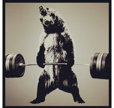 deadlifting bear