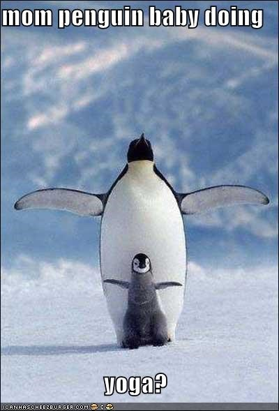 mom penguin baby doing yoga? - from Cheezburger (of course)