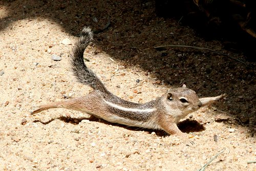 squirrel stretching