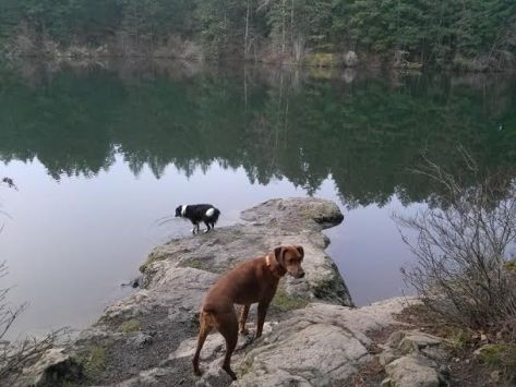 two dogs on a rock overlooking a lake