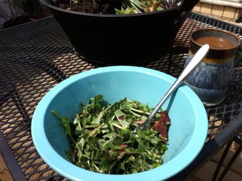 Dandelion Bacon salad. The trick is to make a roux from 1 tbl fat, 1 tbl flour then add a mix of 1/4c honey, 1/4c lemon juice, 1/2 c milk. Mix that still warm over 8c greens &4 slices of bacon (vegan option roasted pine nuts). Mmmmmmm