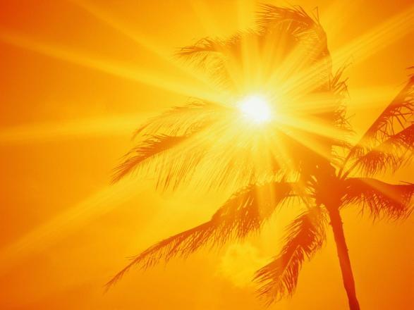 bright sun peeking through a palm tree