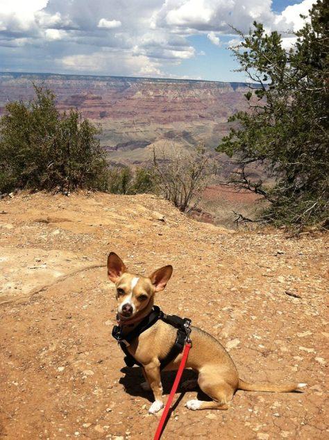 Paloma at the Grand Canyon