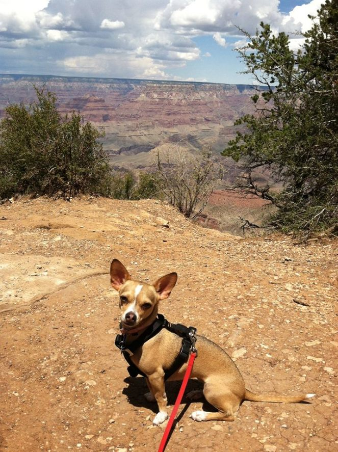 Paloma at the Grand Canyon