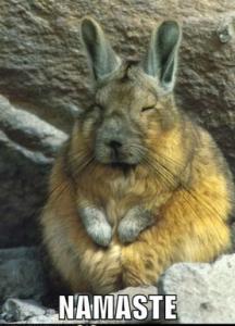namaste-bunny