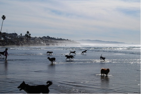 dogs-running-beach