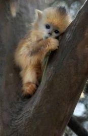 cute monkey2