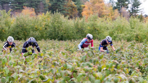 A group of female cross racers biking through an orchard of small apple trees.