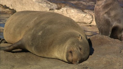 seal-on-rock