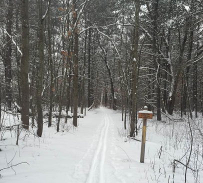 The woods at Foss Farm, ski tracks in the middle and trees all around.
