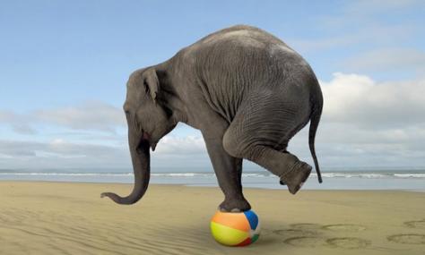 an elephant balancing on a beach ball on the beach!