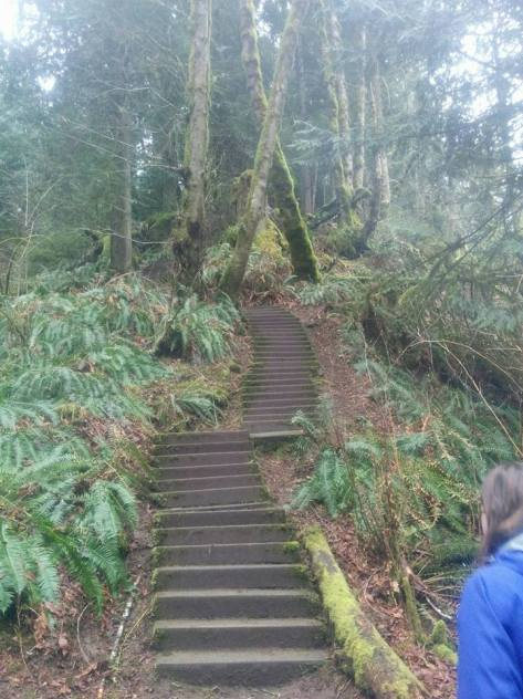 Image description: Steps up into mossy forest.