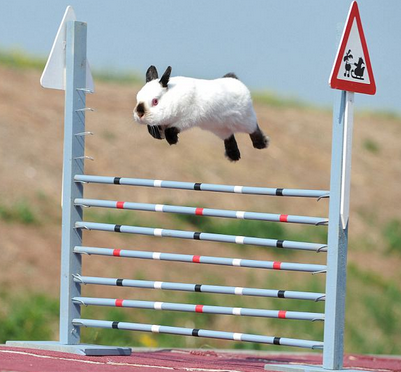 A white bunny with black feet and ears, jumping over a high jump