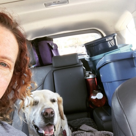 Looking towards the back seat of a car with grey interior. A smiling panting yellow lab is centered and surrounded by camping gear in blue plastic boxes.
