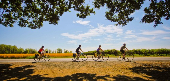 4 cyclists riding along a flat country road on a sunny day, with trees overhanging in the foreground.