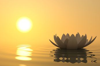 Image description: Yellow background with a sun reflecting on the water on the left side, a lotus flower on the water's surface with a rippled reflection on the right side.
