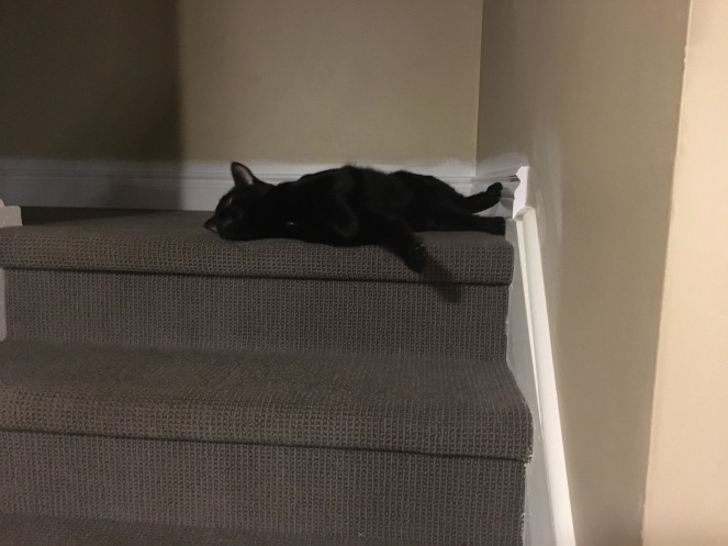 A black cat flopping on a top step. He looks deflated.