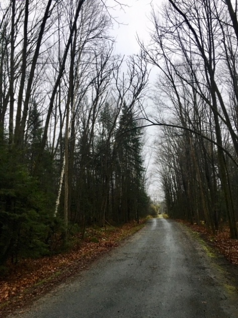 Image description: cottage road with trees on either side, leaves all off and scattered on the side of the road, overcast daylight sky.