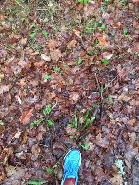 Image description: ground covered in wet fall leaves with a bit of greenery, some dirt, and Tracy's left foot wearing a robin blue running shoe and red socks.