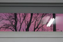 Image description: Upper window through which you can see the pink sky at sunset through the silhouette of trees. Reflection of the fluorescent light of the studio is visible on the right side of the window. The white studio wall and window blind frames the window.