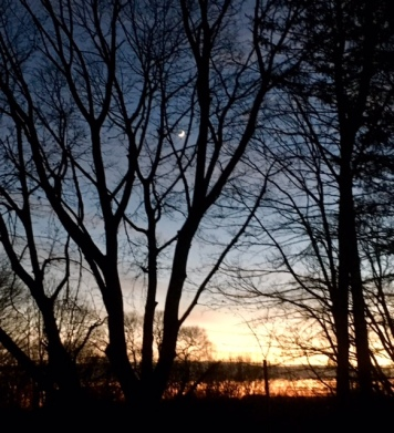Three views of sunset through trees, with a crescent moon already high in the sky, around 5pm.