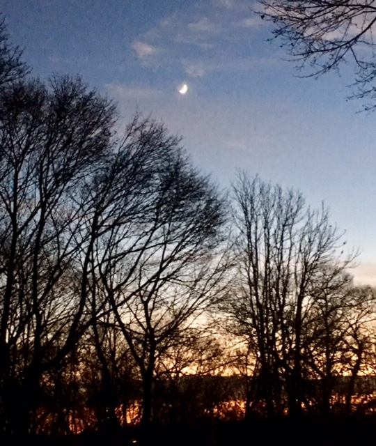 Trees and dark sky and crescent moon,