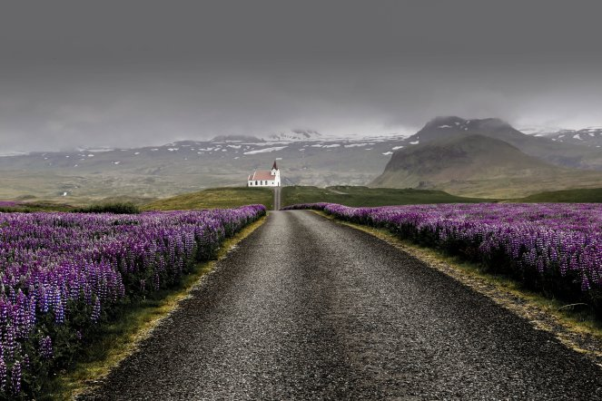 Image description: A photo of a winding road in Iceland with lupins by the roadside
