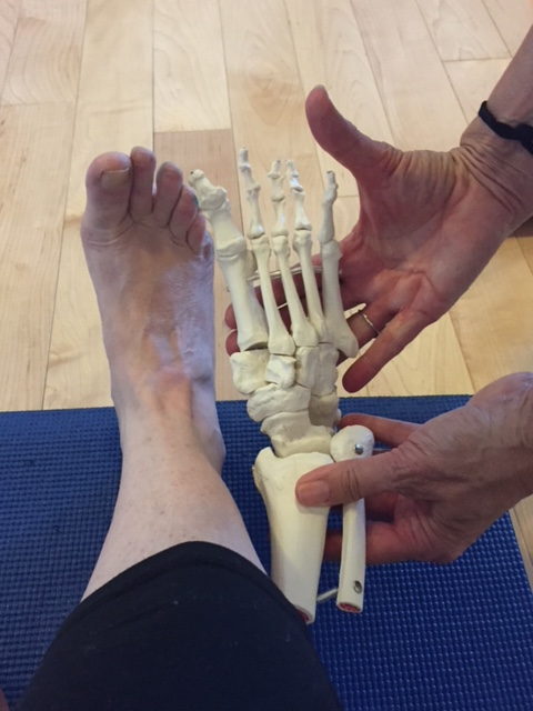 a view of my bare foot, with someone holding a skeletal model of a foot beside me