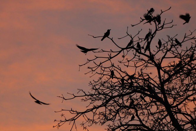 Image description: Sillhouettes of birds in a tree at sunset. some flying, some perched in the tree.