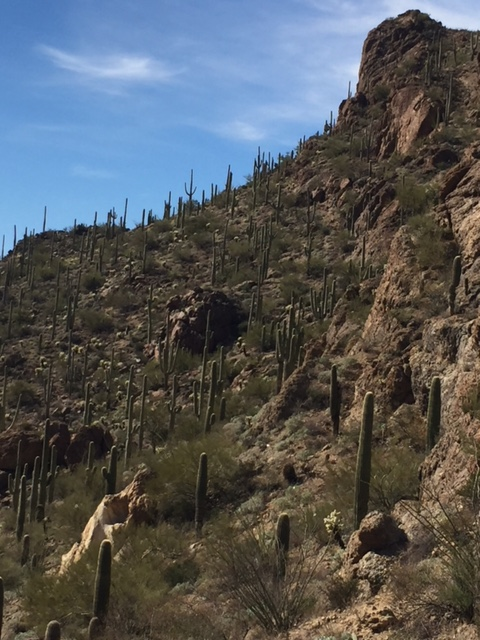 The side of a mountain, dotted with Saguaro cacti, at Gates Pass near Tucson.