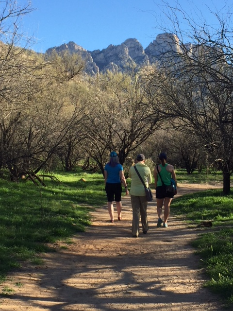 Walking through a woodsy, green area, headed up to more desert views.