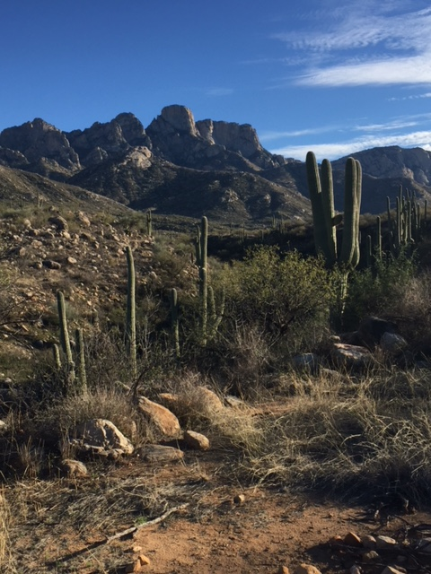View of the Catalina mountains, with cactus and scrub bush in the foreground.