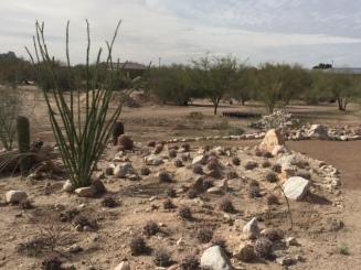 Tall occotillo and small cacti along a path.