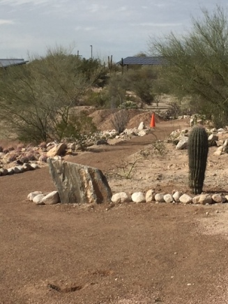 A walking path in progress, with rocks big and small, and barrel cactus.
