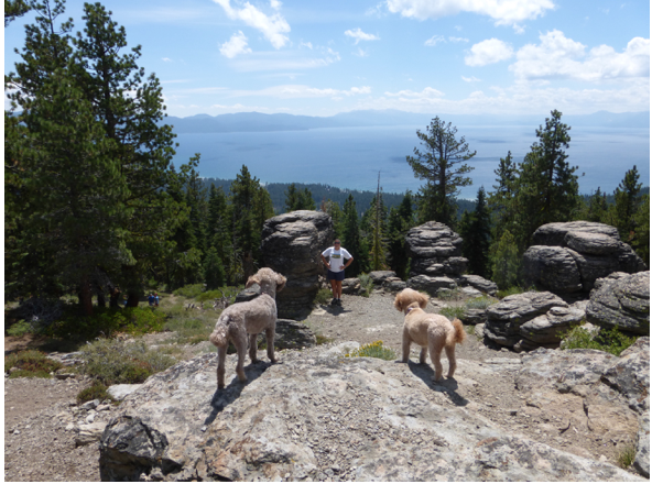 Just to give a sense of size of the lake and its surroundings, here I am with my guard poodles at a Lake Tahoe overlook in August 2014.