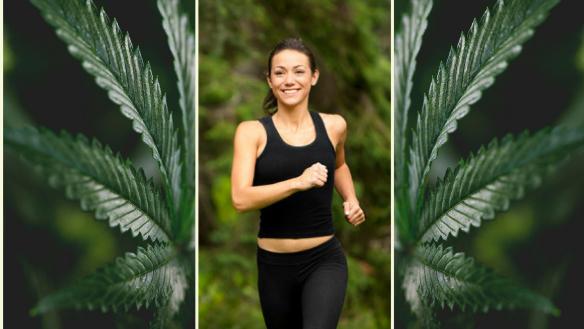 hhh-cannabis-and-cardio