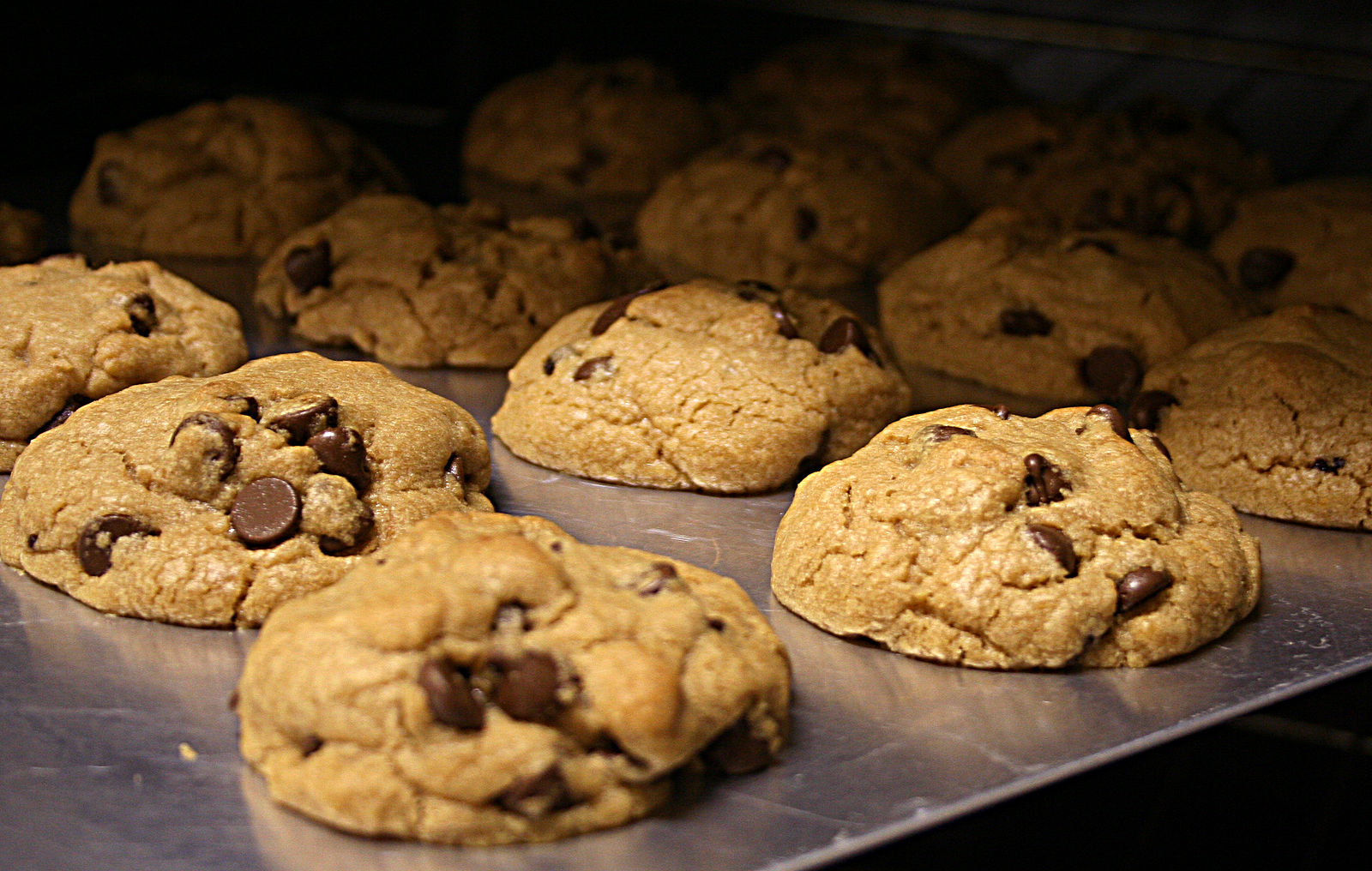 A cookie sheet of fresh baked chocolate chip cookies. These are the thick kind made with butter and brown sugar.
