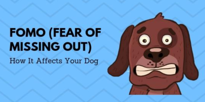 Extreme fear of missing out and how it affects your dog(weird caption!) and a pic of a dog looking anxious.