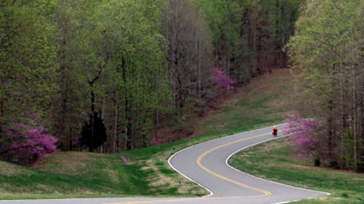 Cyclist descending down Natchez Trace parkway in Tennessee, redbuds blooming.