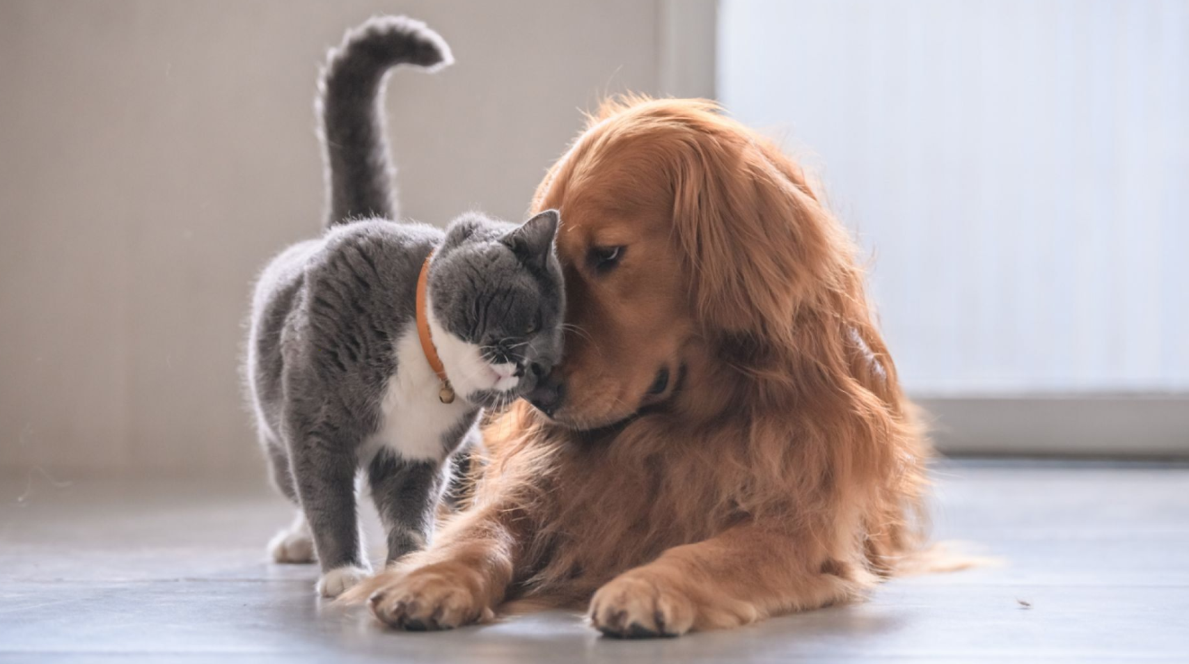 A dog and cat, soothing each other in oooh-worthy style.