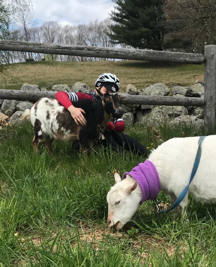 Discreet goat petting.