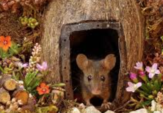 Mouse in a house.
