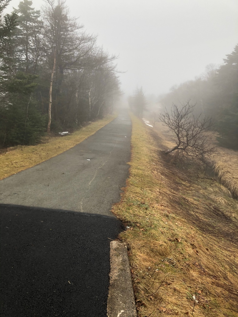 A paved path with trees on the side on an overcast,  foggy day.