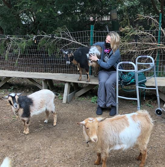 Goats, not noticing my walker.