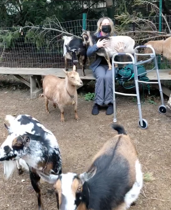More goats, including one that isn't noticing anything other than my lap is free for cuddling.