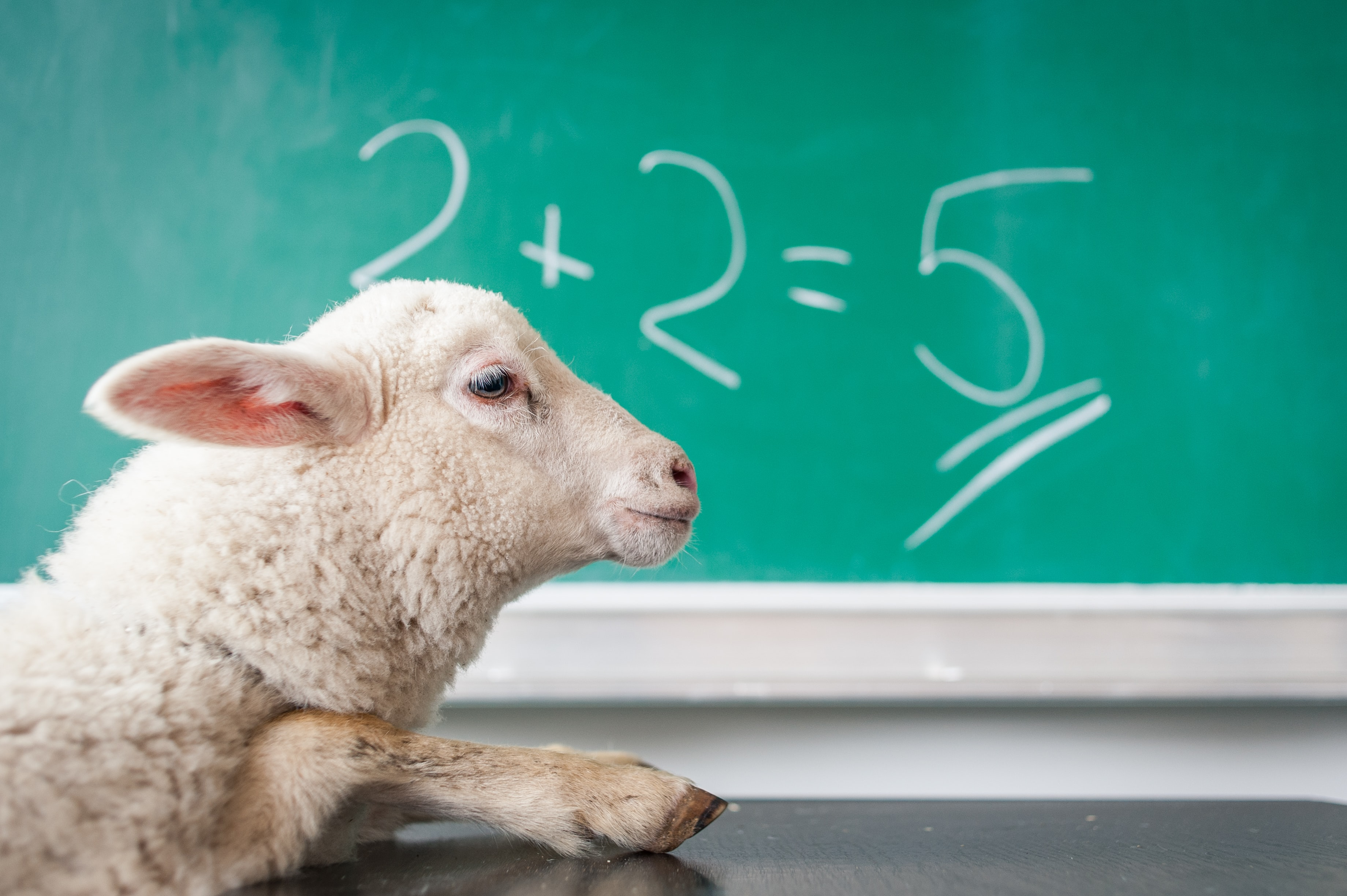 2+2=5 level of wrongness. I don't know what the lamb has to do with this, but I'm sure it's not at fault.