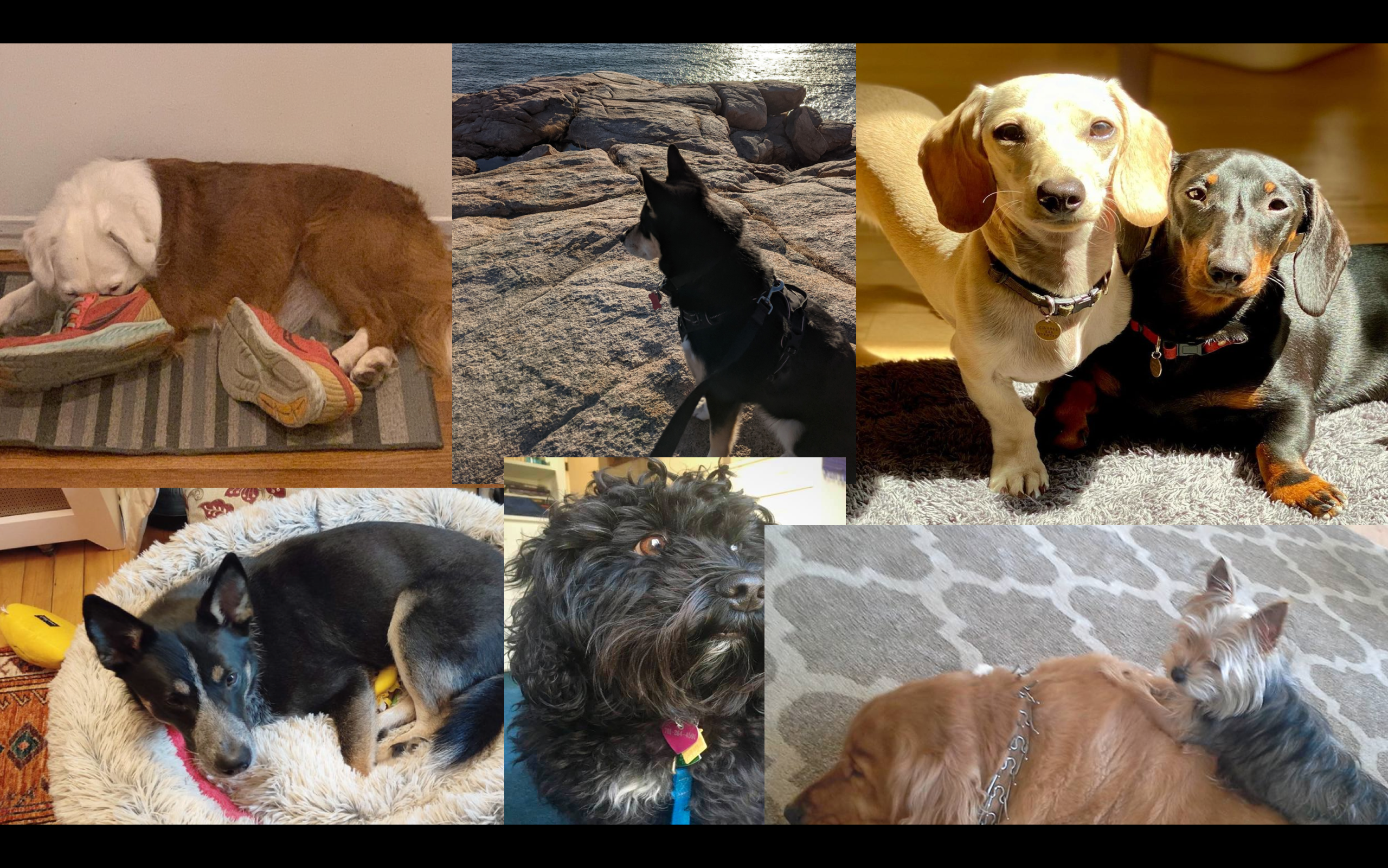 Some of the beloved dogs I've walked this year.